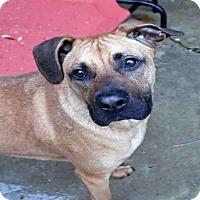 Adopt A Pet :: WRANGLER - Fort Walton Beach, FL