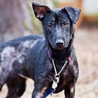 Adopt A Pet :: Tyra Banks - Redmond, WA