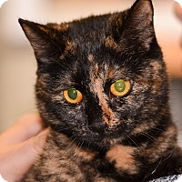 Adopt A Pet :: Sunshine - Ottumwa, IA