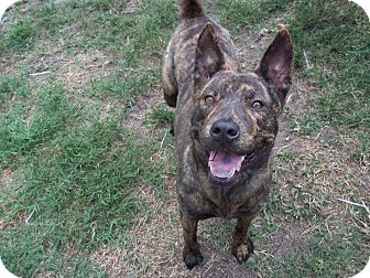 Cattle Dog Mix Dog for adoption in Tampa, Florida - Emily