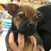 Adopt A Pet :: Kroy - Phoenix, AZ