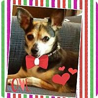 Adopt A Pet :: Billie Jean - Hagerstown, MD