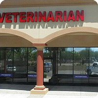 Adopt A Pet :: AFFORDABLE VETERINARY CARE!! - Chandler, AZ