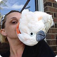 Adopt A Pet :: Molly - Independence, KY