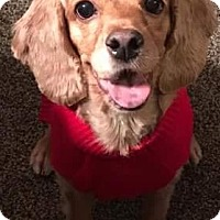 Adopt A Pet :: LOU - Rancho Cucamonga, CA