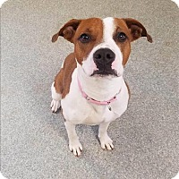 Adopt A Pet :: Myrtle - Delaware, OH