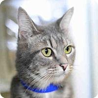 Adopt A Pet :: MIA - West Palm Beach, FL