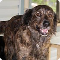 Adopt A Pet :: Tooti - Towson, MD