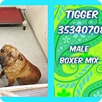 Adopt A Pet :: TIGGER - Kenansville, NC