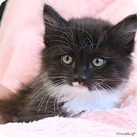 Adopt A Pet :: Clyde - Westchester, CA