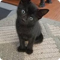 Adopt A Pet :: April - Leonardtown, MD