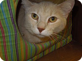 Domestic Shorthair Cat for adoption in Medina, Ohio - Jake