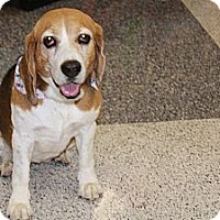 Adopt A Pet :: Marjorie - Phoenix, AZ