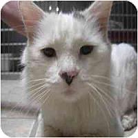 Adopt A Pet :: Greyson - Phoenix, AZ