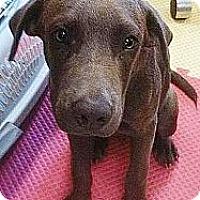 Adopt A Pet :: Frankie - Silsbee, TX