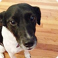 Adopt A Pet :: Lilly - PENDING ADOPTION - Braintree, MA