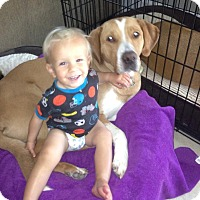 Adopt A Pet :: Jake - Largo, FL