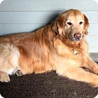 Adopt A Pet :: Saving Grace - New Canaan, CT