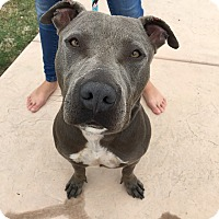 Adopt A Pet :: Sampson - San Diego, CA