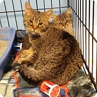 Adopt A Pet :: Beast - Chelsea - Kalamazoo, MI