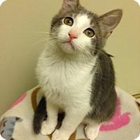 Adopt A Pet :: Fuzzy - Woodland Hills, CA