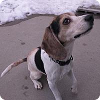 Adopt A Pet :: Hamilton - Shaftsbury, VT