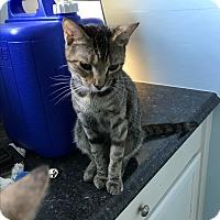 Adopt A Pet :: Lucy - Lakeland, FL