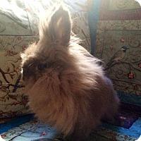 Adopt A Pet :: Violet - Columbus, OH
