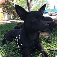 Adopt A Pet :: Jack - Pleasanton, CA