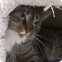 Adopt A Pet :: Marie - East Meadow, NY