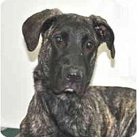 Adopt A Pet :: Hope - Port Washington, NY