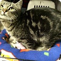 Adopt A Pet :: Jupiter - Byron Center, MI