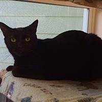 Adopt A Pet :: Shadow - Pompano Beach, FL