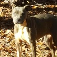 Adopt A Pet :: Bama - Powder Springs, GA
