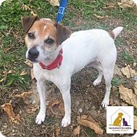 Adopt A Pet :: Skippy - Eighty Four, PA