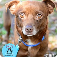 Adopt A Pet :: Cliff - Bradenton, FL