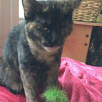 Adopt A Pet :: Millie - Palatine, IL
