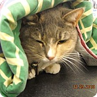 Adopt A Pet :: Scarlotte - Riverside, RI