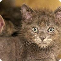 Adopt A Pet :: Bugs - Sacramento, CA