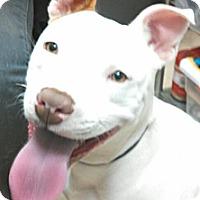 Adopt A Pet :: Bunni - San Diego, CA