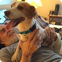 Adopt A Pet :: Taffy - Knoxville, TN