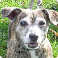 Adopt A Pet :: Zeke - Warren, PA