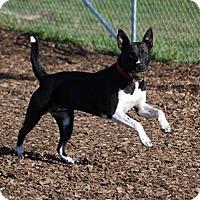 Adopt A Pet :: Bell - McKinleyville, CA