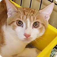 Adopt A Pet :: Billy - Ocean City, NJ