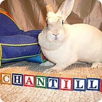 Adopt A Pet :: Chantilly - Newport, DE