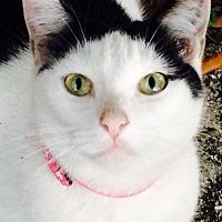 Adopt A Pet :: Jill - Hallandale, FL