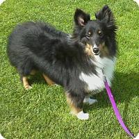 Adopt A Pet :: Lolly - San Diego, CA