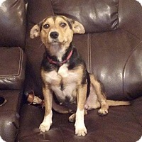 Adopt A Pet :: Tilly - Huntsville, TN
