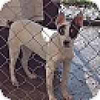 Hound (Unknown Type) Mix Dog for adoption in Kaufman, Texas - Jackie