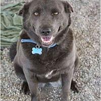 Adopt A Pet :: Meiko - Littlerock, CA